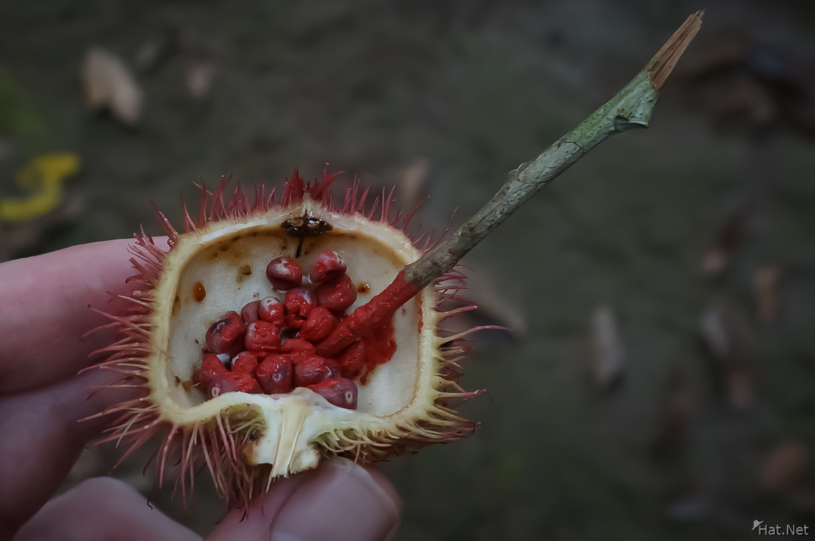 fruit for red coloring