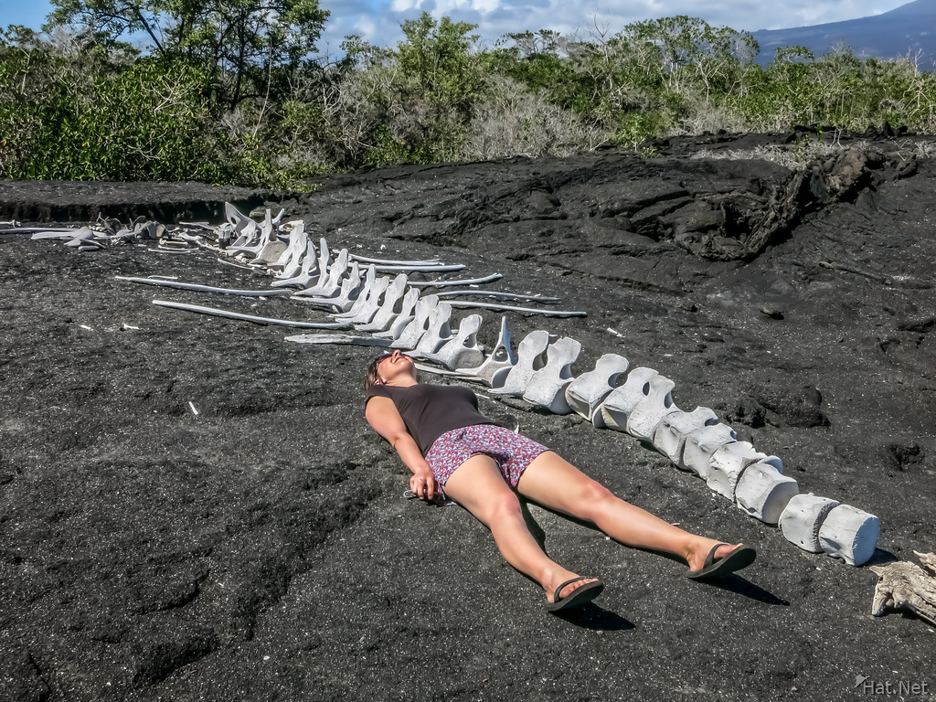 whale corpse after swallowing a person