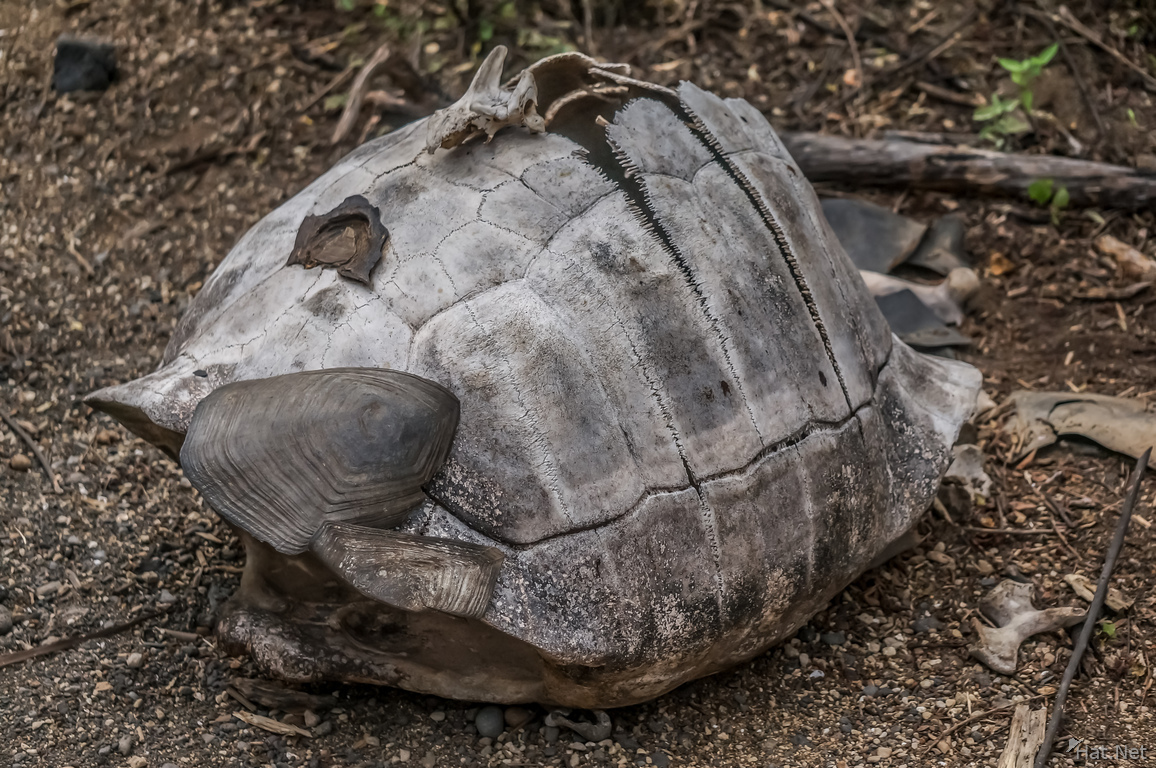 how to know if turtle is dead