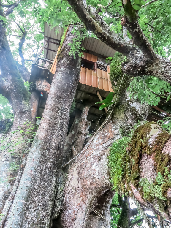 Quinta el Ceibo Tree House