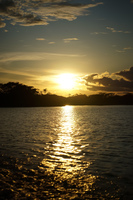 Amazon Sunset Amazon,  Cuyabeno Reserve,  Sucumbios,  Ecuador, South America