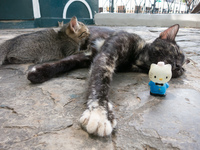 Kitty and Hello Kitty in Simon Bolivar Park Guayaquil, Ecuador, South America