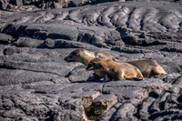 20140513090659-Baby_sea_lion_and_mom_sombre_chino
