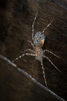 20140417163241-Fishing_Spider