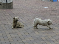 20140501142558-Street_Dog_fight_in_Alausi