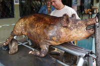 Piggy street food on way to Ingaprica Cuenca, Ecuador, South America